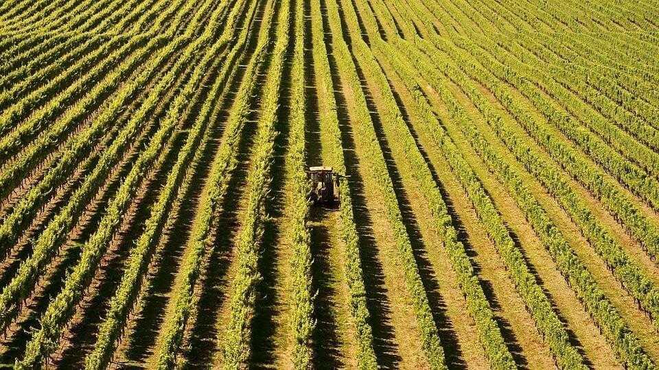 ІТ інновації в агробізнесі