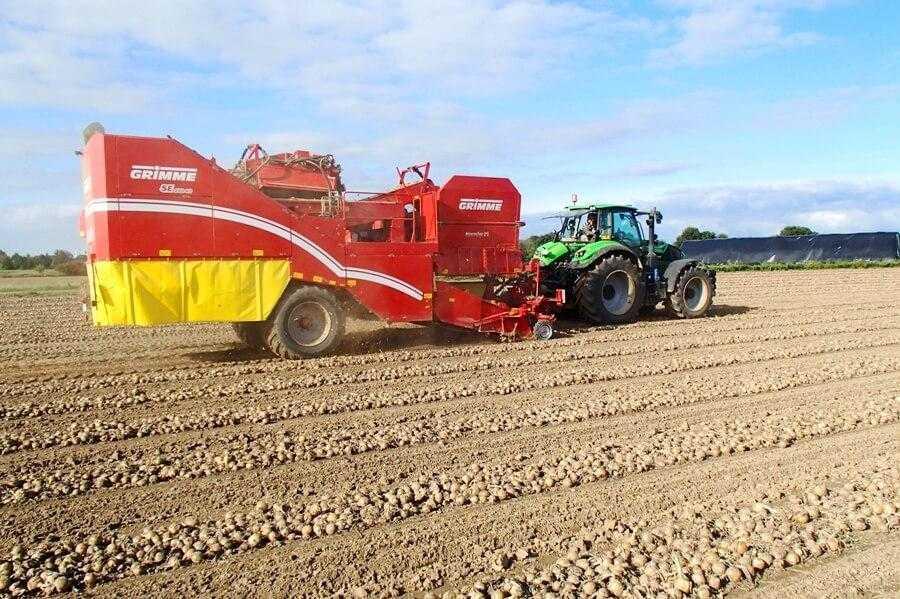 Збирання урожаю картоплі