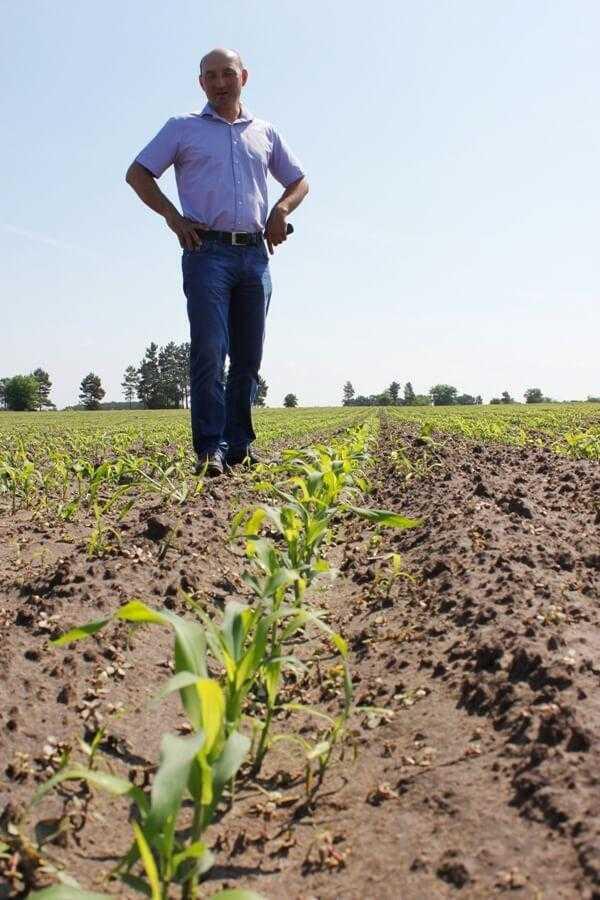 Посіви кукурудзи