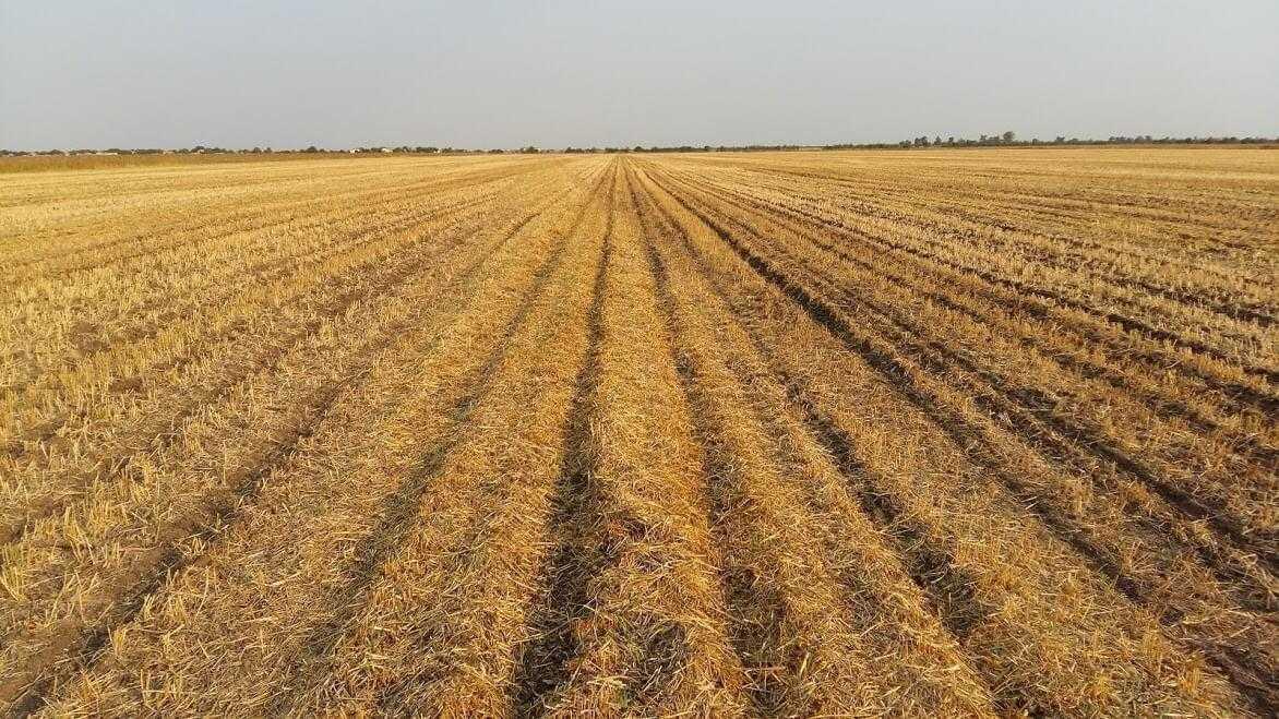 Нерівномірне розподілення соломи не вплинуло на якість висівання