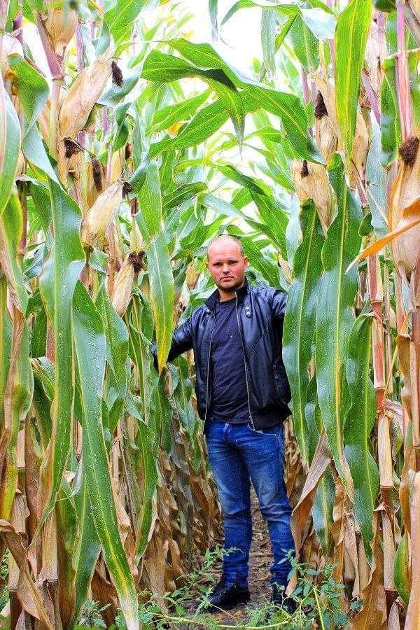 Кукуруза на орошении
