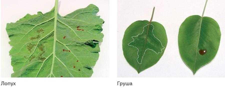 Змочування листкової поверхні