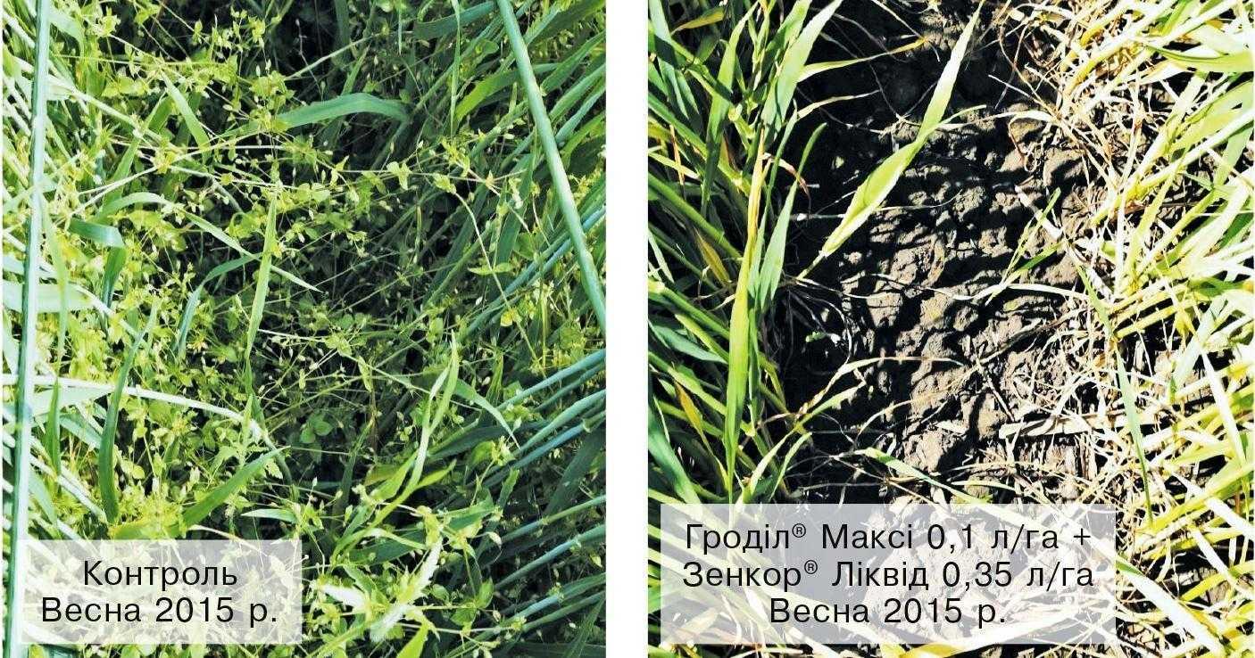 Ефективність осіннього використання гербіцидів на озимій пшениці (с. Кам'янки, Тернопільська область, 2015 р.)