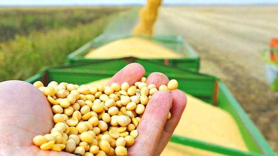 Рис. 1. Очень важно сохранить урожай в хорошем состоянии, поскольку такая соя стоит дороже и пользуется у переработчиков повышенным спросом