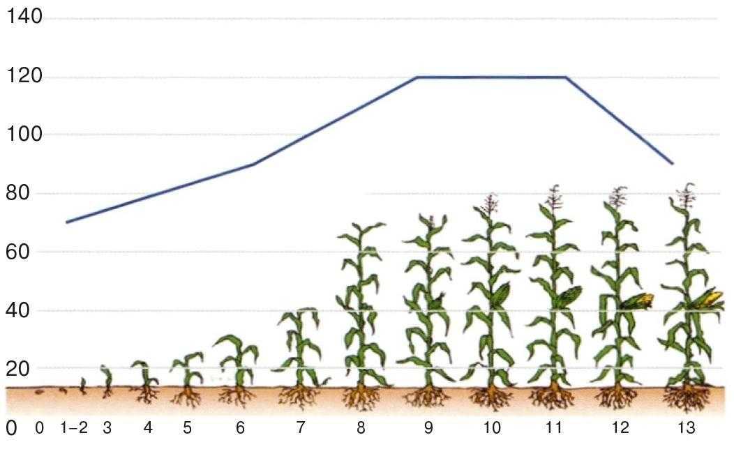 Рис.1. Потреба рослин кукурудзи у волозі (опадів, мм)