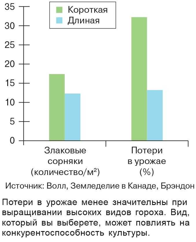 Рис. 2. Длина вьющегося гороха влияет на конкуренцию с сорняками