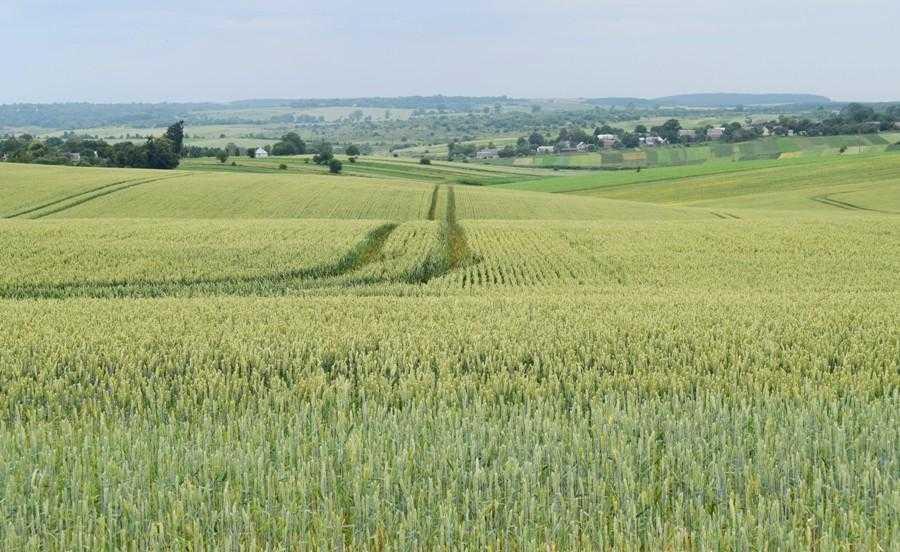 Регіон, в якому розташовані землі ТОВ «Агро-Консалт АВ», багато в чому схожий на місцевість біля Дрездена в Німеччині, звідки родом Александер