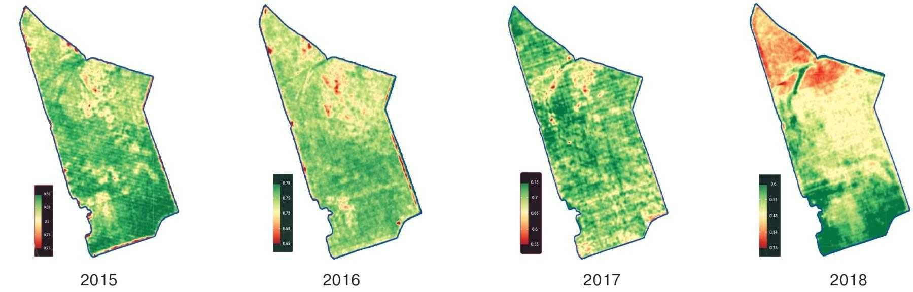 Рис. 4. Показники NDVI на одному і тому ж полі за останніх чотири роки