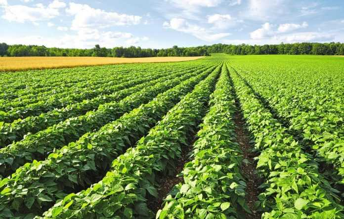 Оптимизация размещения растений сои на поле