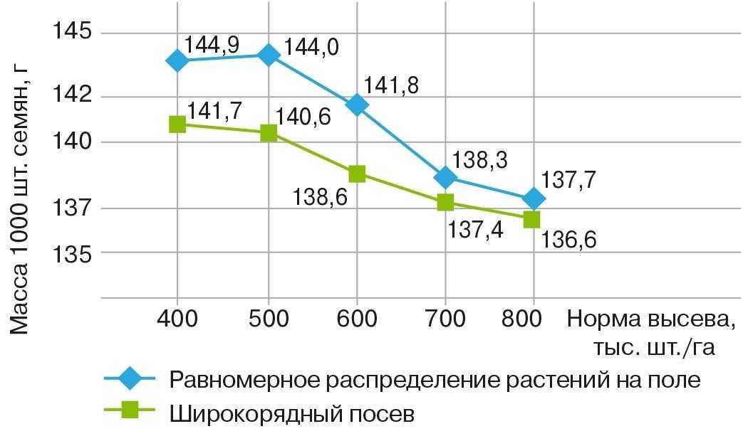Рис. 6. Масса 1000 шт. семян сои при равнораспределении растений на поле и широкорядном севе (усредненные данные за три года на четырех сортах сои)
