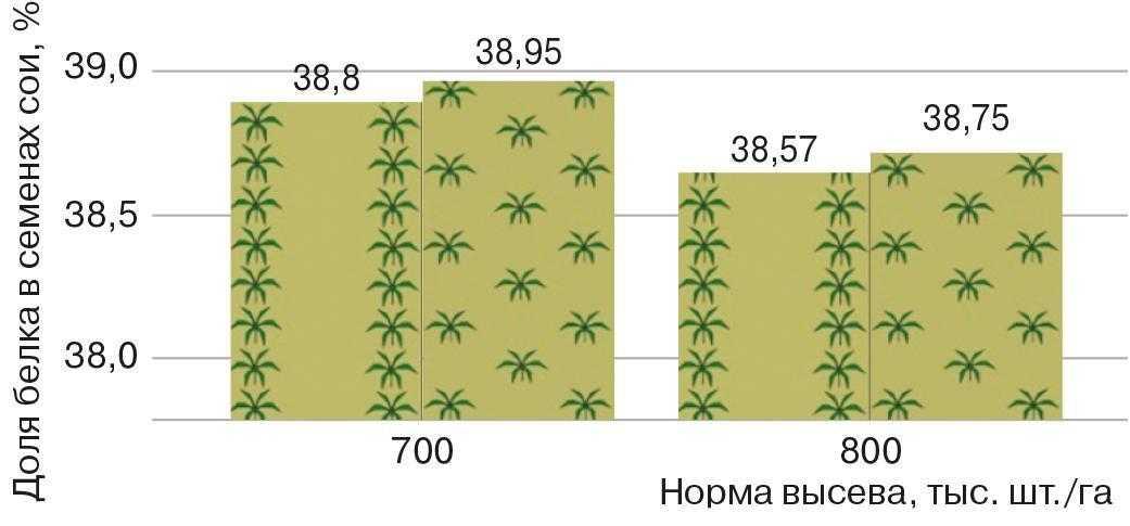 Рис. 7. Доля белка в семенах сои при различном варианте распределения растений на поле