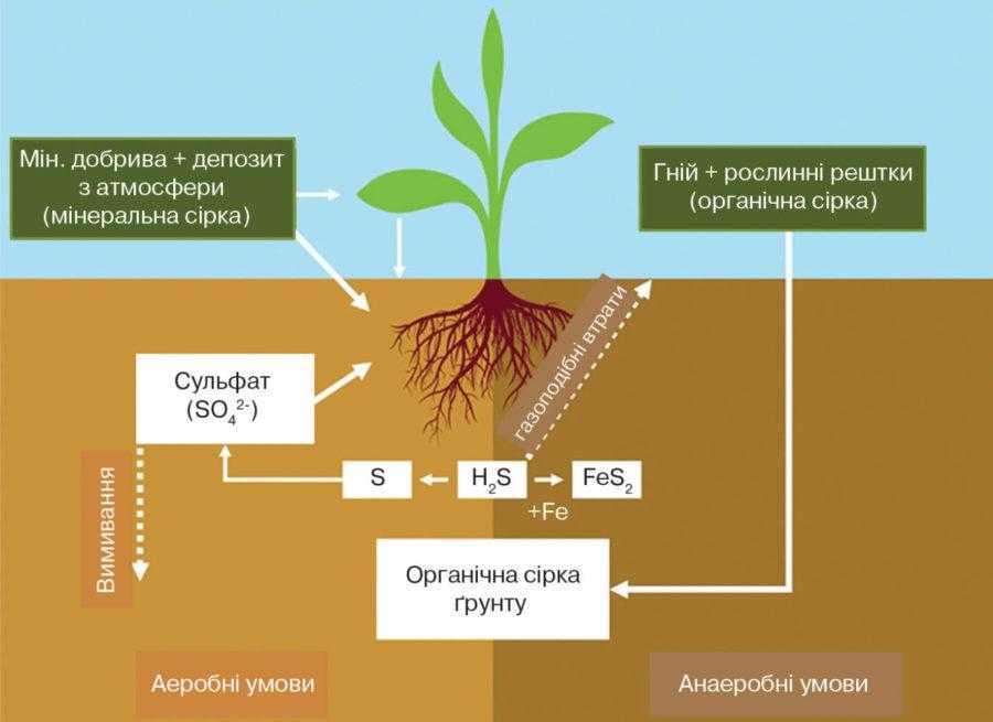 Рис. 1. Кругообіг сірки у ґрунті