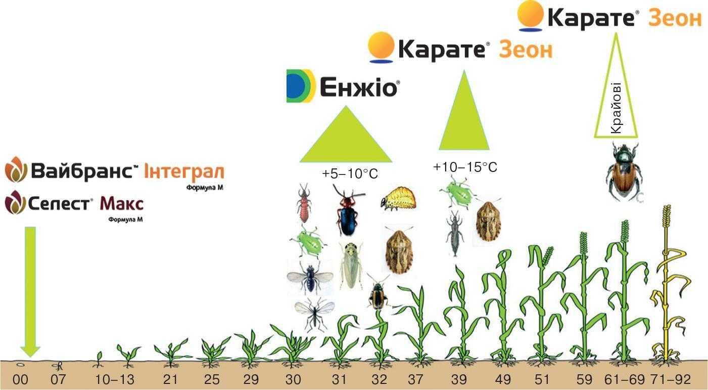 Система iнсектицидного захисту зернових колосових культур у весняно-літній період