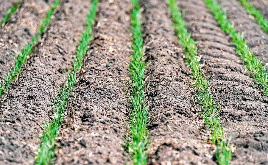 Рідкі добрива найбільш ефективно засвоюються з точки зору біології: рідка форма є найбільш доступною для рослин, особливо в посуху
