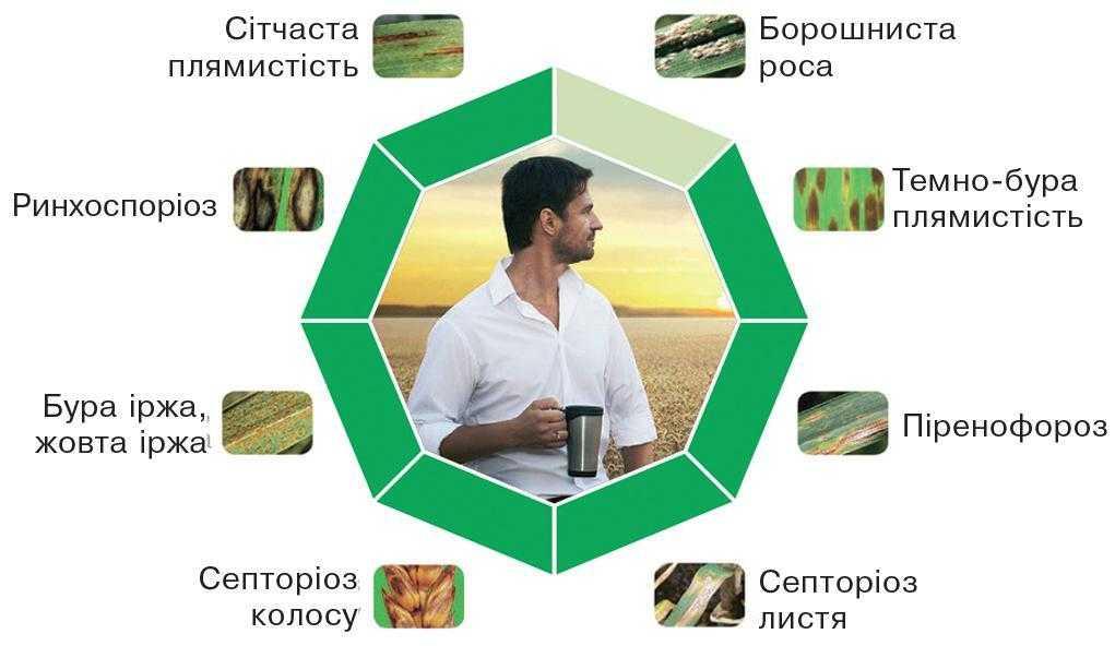 Рис. 5. Адексар® СЕ Плюс – відмінний контроль листових хвороб від прапорцевого листка до завершення наливу зерна