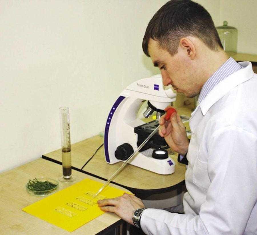 Рис. 8. Гельминтологический анализ почвы – ваш первый шаг в успешном выращивании батата