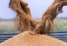 Угрозы при хранении зерна