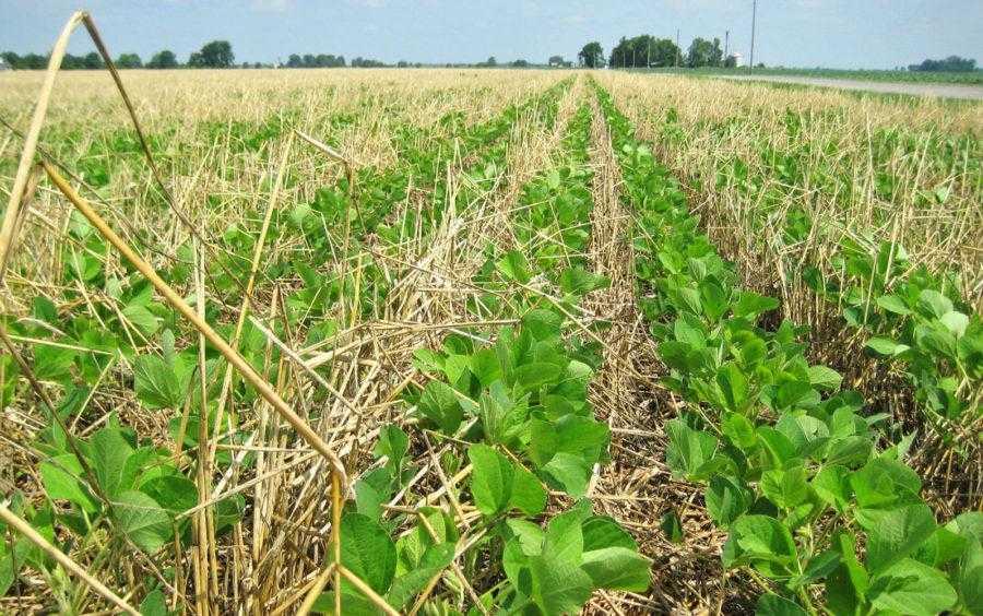 Для выбора оптимальных покровных культур нужно определить свободные ниши в каждом периоде выращивания или незадействованные площади на ферме