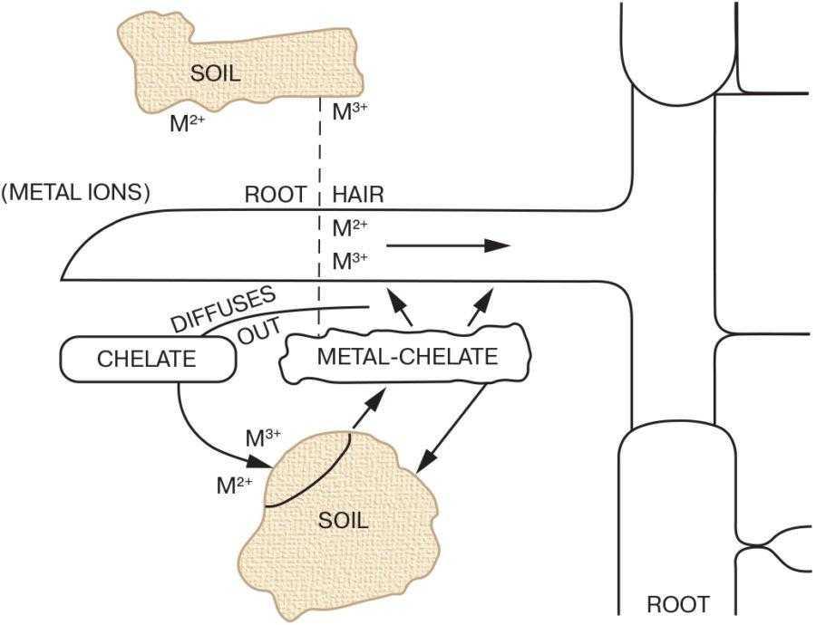 Рис. 2. Мобільність іонів металів у ґрунті під дією халатів