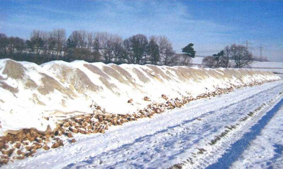 Не только высокие температуры, но и заморозки могут привести к существенным потерям при хранении. Важно правильно расположить и сформировать бурт и, по возможности, укрыть его ветрозащитным материалом