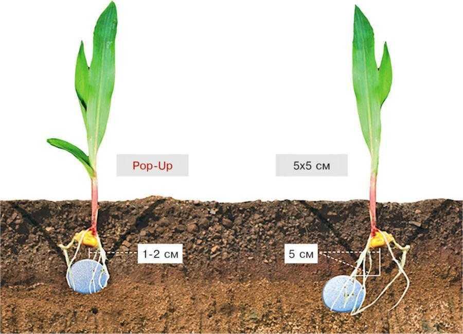 Способи розміщення стартових добрив у ґрунті