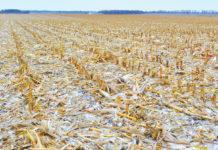 Надходження мікроелементів у ґрунт із побічною продукцією сільськогосподарських культур