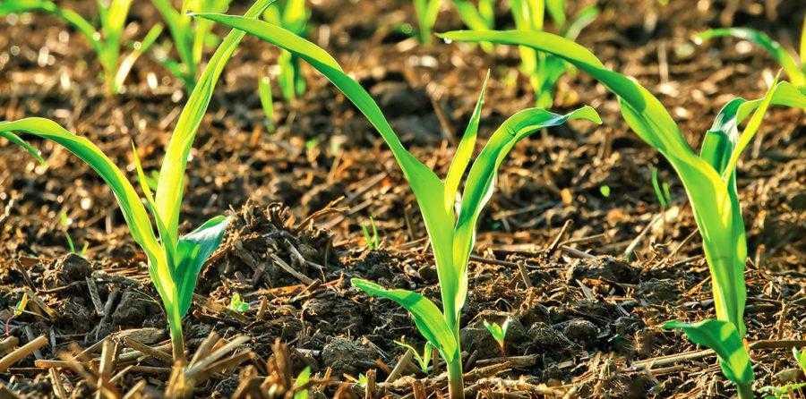 Большая часть элементов питания в почве находится не в почвенном растворе, а в связанном состоянии на почвенных частицах или входит в состав гумуса, минералов и становится доступной растениям только в результате жизнедеятельности почвенных микроорганизмов