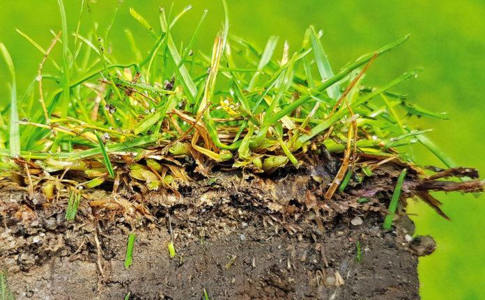 Роль сапрофитов в создании почвы и их влияние на питание растений