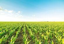 Змінні норми висіву кукурудзи Easy VR від «Лімагрейн»: практика застосування