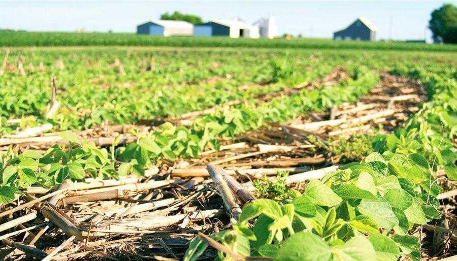 За наявності 5-сантиметрового мульчувального шару на поверхні ґрунту можна отримати до 40 мм запасу вологи за вегетаційний період завдяки утворенню ґрунтових рос