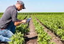 Нові цифрові рішення для українських аграріїв від BASF