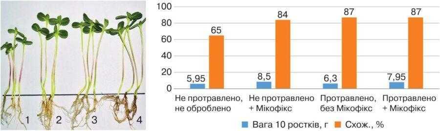 Рис. 2. Результати пророщування насіння соняшнику, обробленого препаратом Мікофікс