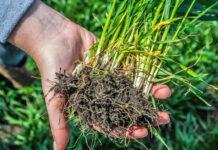 6 фактів про кореневу систему та кілька практичних порад