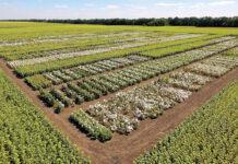 Пластичні гібриди від агрофірми «Сади України» – гарантія високих врожаїв