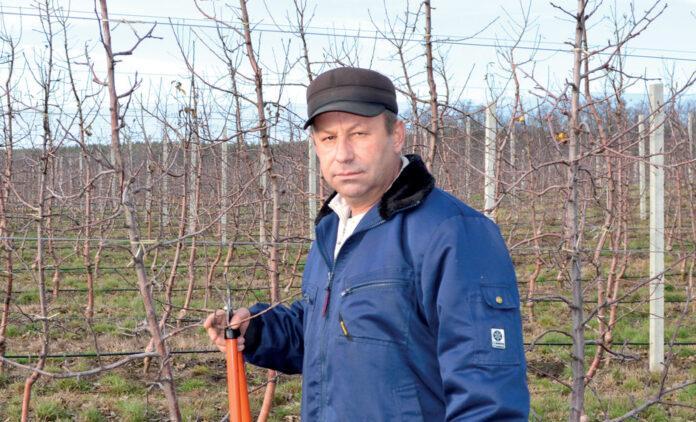 Станіслав Мельник – головний технолог із садівництва компанії «Маїс»