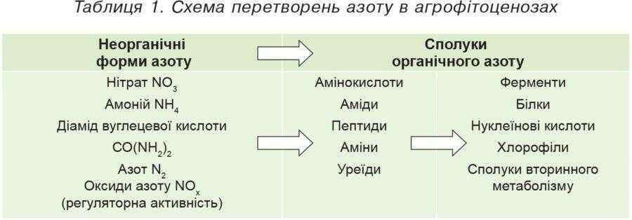 Таблиця 1. Схема перетворень азоту в агрофітоценозах
