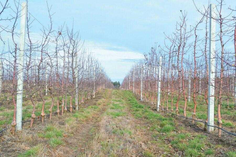В господарстві вирощують сорти яблук, які сьогодні користуються найбільшим попитом у світі – Гала, Чемпіон, Фуджі, Бребурн, Голден Делішес, Джонаголд і його клони, Ред Чіф, а також кілька імунних сортів