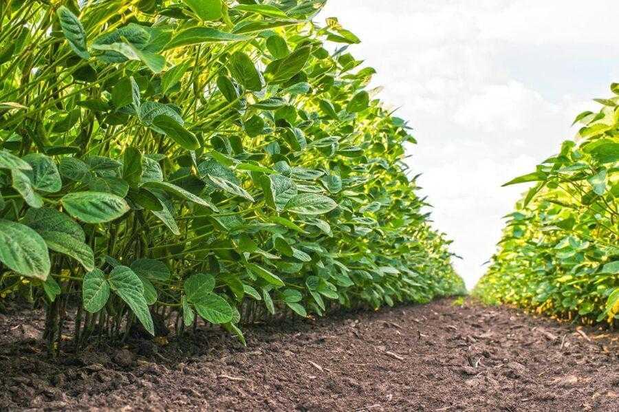 Тип ґрунту, а також кількість органічних речовин, які містяться в ньому, здатні вплинути як на технічну ефективність ґрунтового гербіциду, так і на тривалість захисної дії. Чим легший грунт, тим менша кількість препарату використовується для обприскування одиниці площі