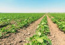 Вплив способу сівби і норми висіву насіння на ріст і розвиток сої