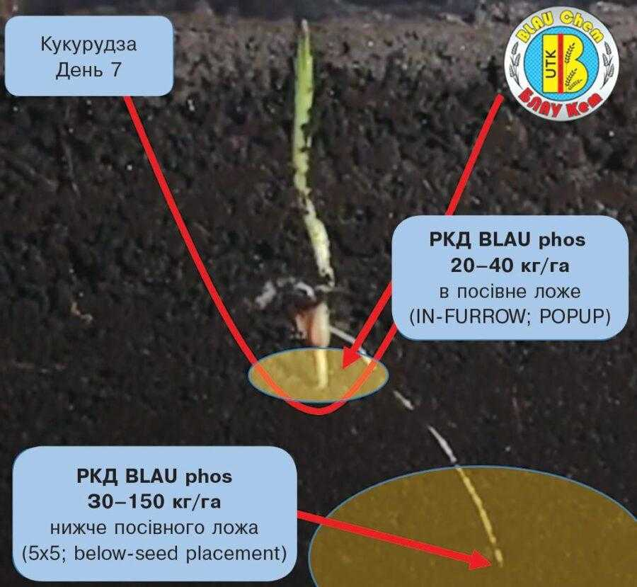 РКД BLAU phos