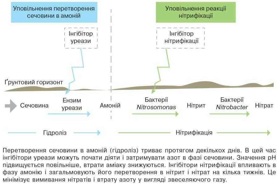 Рис. Схема зон дії інгібіторів уреази та нітрифікації