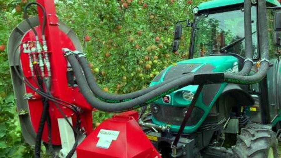 Як досягнути інтенсивного червоного кольору яблука – досвід австралійських садівників