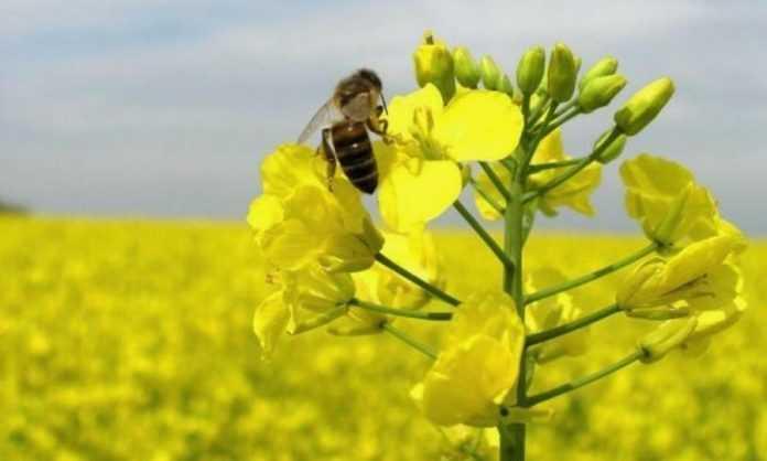 Експерт: Проблема загибелі бджіл від неонікотиноїдів — надумана