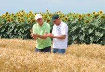 Не азотом єдиним… Роль позакореневих підживлень у підвищенні врожайності зернових