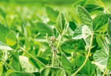 Продуктивність сої в умовах полісся залежно від елементів технології вирощування