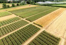 Сорти пшениці озимої із груповою стійкістю проти хвороб для Лісостепу України