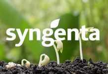 Syngenta Group приступила до реалізації свого нового «Плану успішного зростання»