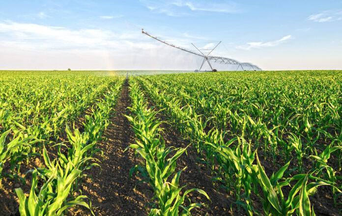 Вплив водного режиму та способів обробітку ґрунту на продуктивність кукурудзи