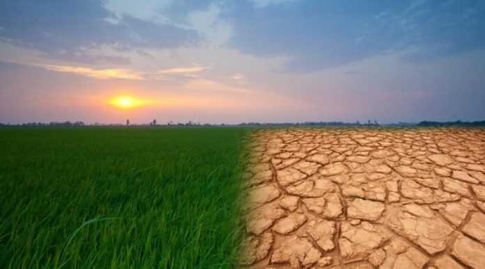 Чого аграріям чекати від зміни клімату в найближчі роки – прогноз НБУ