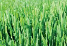 Осінні резерви для підвищення врожайності зернових